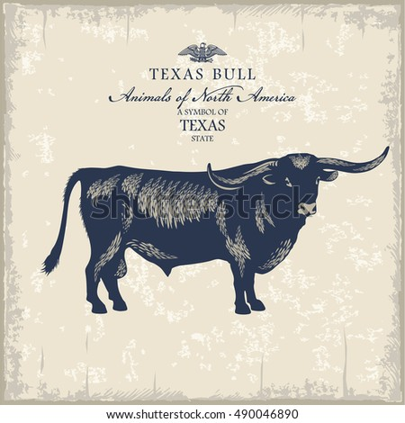 texas bull  pet  animal of...