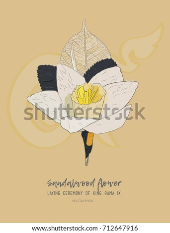 Thai Artificial Funeral Daffodil Flower or Dok mai chan. sandalwood flower-laying ceremony  for mourn to king of thailand pass away . hand draw sketch  sandalwood flower for king