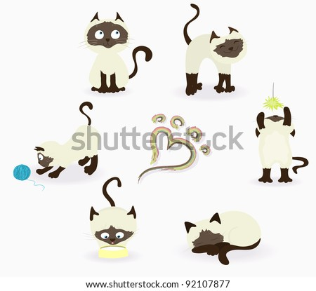thai  siamese  cats in various