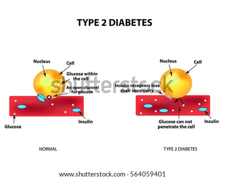 the absorption of glucose by