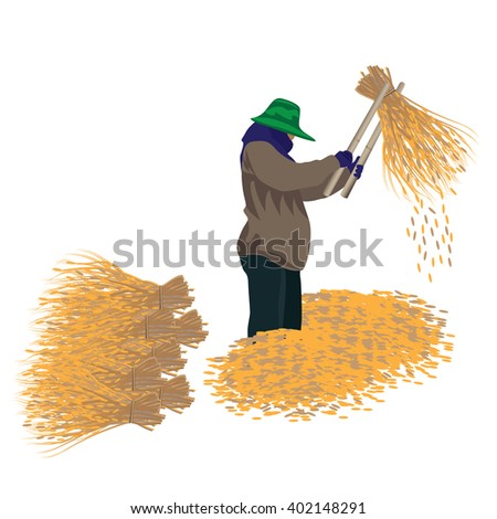 the agriculturist thashing rice vector design