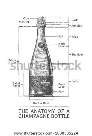 the anatomy of a champagne