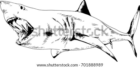 the attacking great white shark