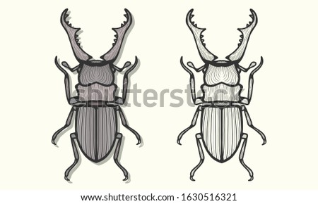 the beautiful stag beetle art