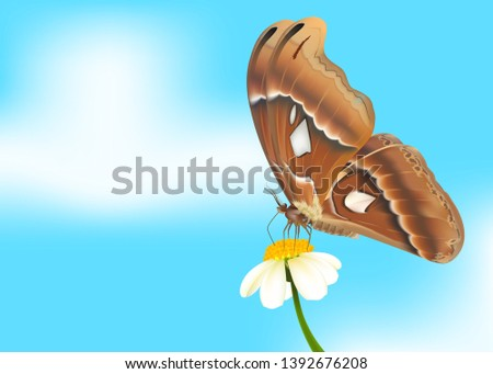 the big butterfly on flower and