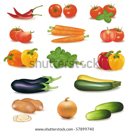 The big colorful group of vegetables. Photo-realistic vector.