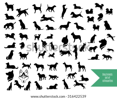 the big vector set of dog