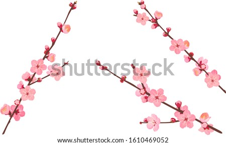 The branche of plum blossoms Stock photo ©