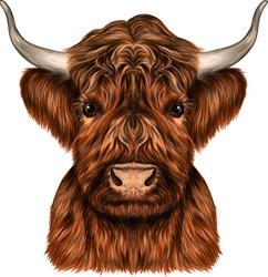 the bull's head animal vector illustration