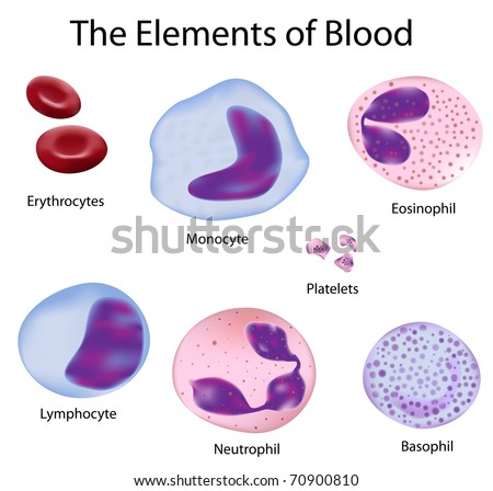 the cells of the blood depicted