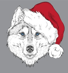 The christmas poster with the image husky portrait in Santa's hat. Hand draw vector illustration.