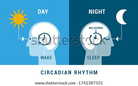 The circadian rhythm and sleep-wake cycle: how exposure to sunlight regulates melatonin secretion and body processes during day and night Foto stock ©