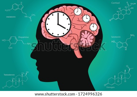 The circadian rhythms are controlled by circadian clocks or biological clock these clocks tell our brain when to sleep, tell our gut when to digest and control our activity in several day. Photo stock ©