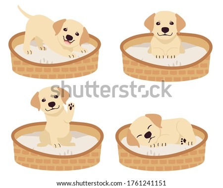 the collection of cute labrador