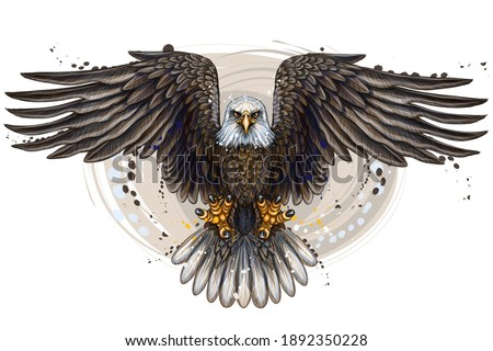 The eagle. Flying bald eagle.  Color, realistic, art portrait of a soaring bald eagle on a white background in a watercolor style.  Digital vector graphics. Separate layers Foto stock ©