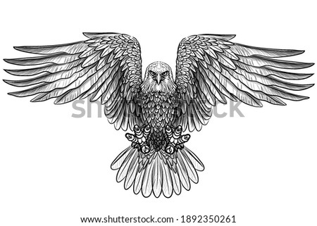 The eagle. Flying bald eagle. Graphic, black and white drawing of a bird of prey sketch on a white background. Digital vector graphics. Separate layers