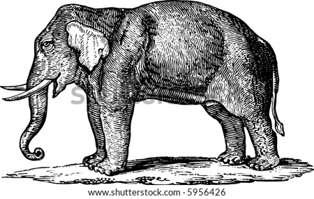 The elephant in style of an ancient engraving