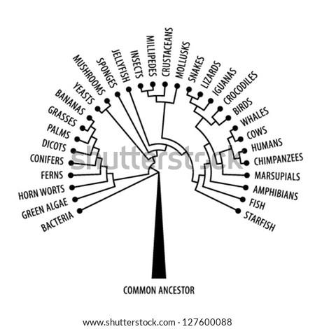 the evolutionary tree of life