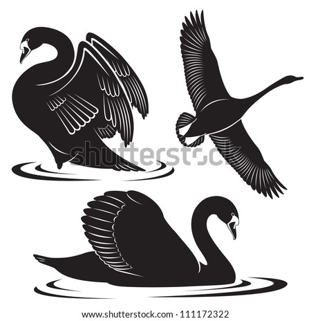 The figure shows a bird swan