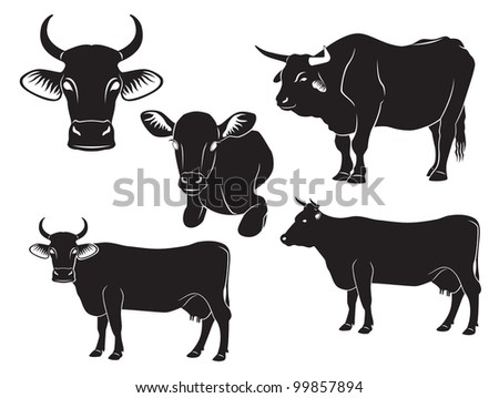 the figure shows a cow, bull and calf