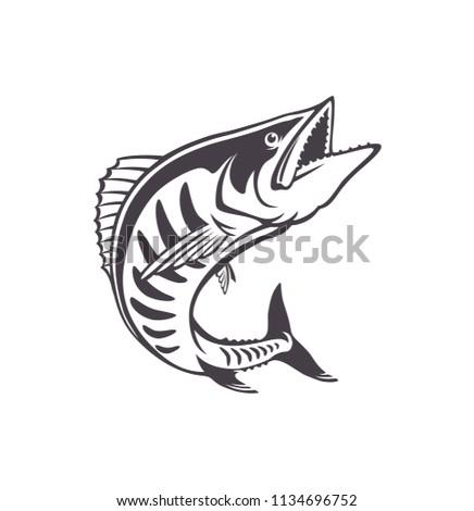 the figure shows a king mackerel
