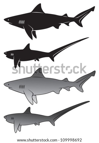 the figure shows a shark