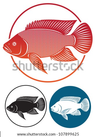 the figure shows the tilapia fish