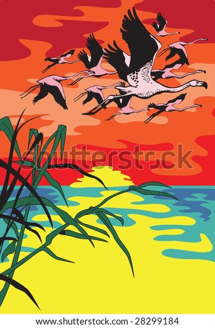 The flight of a flamingo flying against the sun ascending over the river