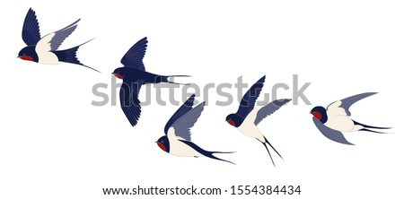 The flying swallows set is isolated. Color vector drawing. Foto stock ©