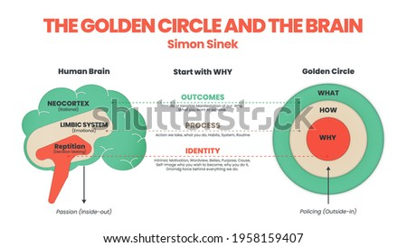 the golden circle and brain