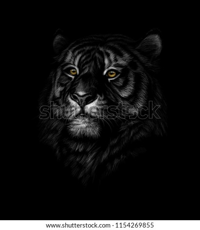 The head of a tiger on a black background