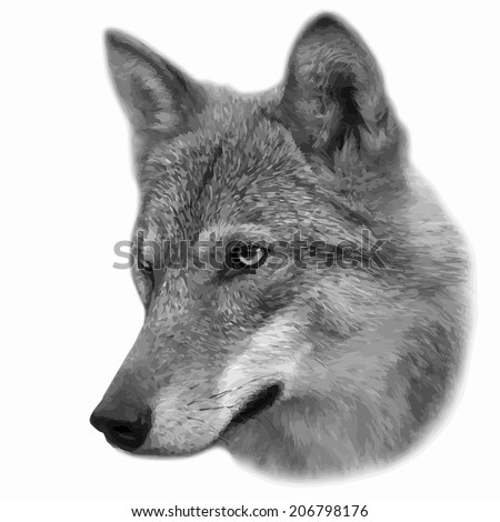 the head of a wolf female