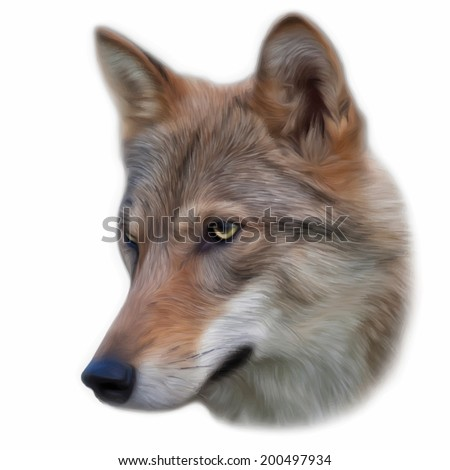 the head of a young wolf female