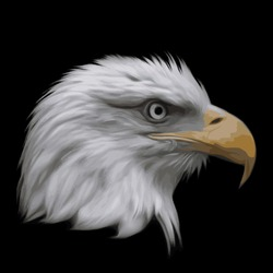 The head of bald eagle, haliaeetus leucocephalus, isolated on black background. Side face portrait of American eagle, US national character, very beautiful bird with proud expression. Vector image.