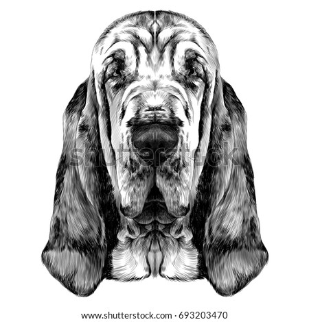 Shutterstock the head of the dog breed Bloodhound vector graphics sketch black and white