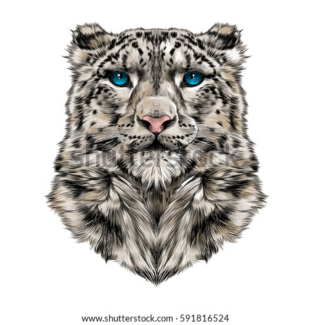 the head of the snow leopard
