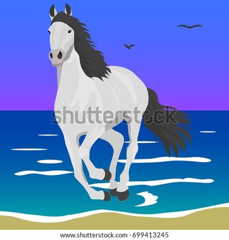 the horse runs along the shore