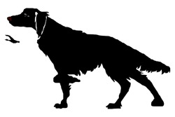 The hunting dog in a rack, a duck, a silhouette on the white background