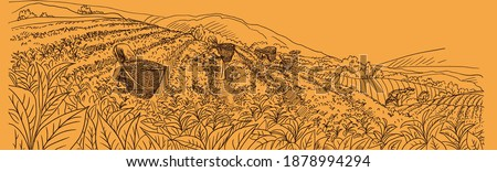 The illustration shows tea harvesting on the mountain slopes of India. Girls in national clothes collect tea leaves in baskets. Mountains, tea, slope, harvesting, India, girl