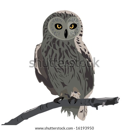 The image of the owl sitting on a branch