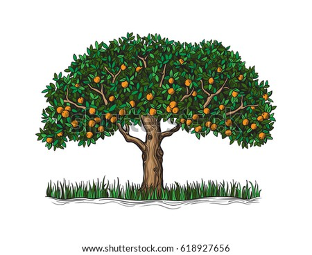 the isolated orange tree with