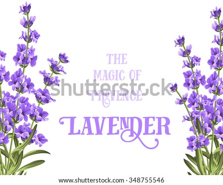 the lavender elegant card with