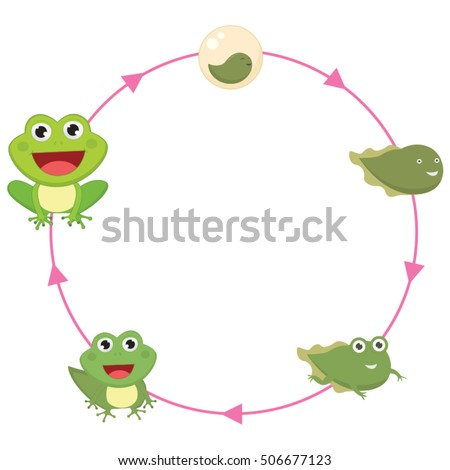 the life cycle of frog vector