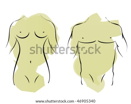 The male and female bodies