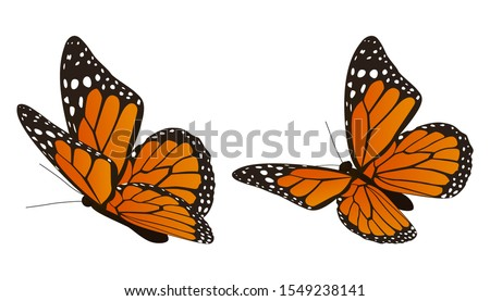 The monarch butterfly vector illustration Stock photo ©