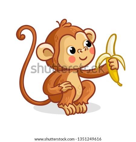 the monkey on a white
