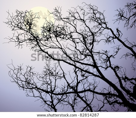 the moon behind tree branches