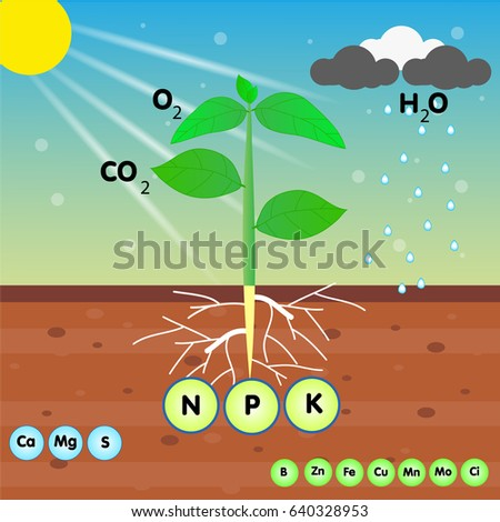 the nutrient of a plant Foto stock ©
