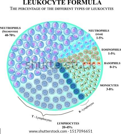 The percentage of different types of white blood cells. Leukocyte formula. Neutrophils, monocytes, lymphocytes, eosinophils, basophils. Cell killers. Immunity Helper Cells. Infographics. Vector.