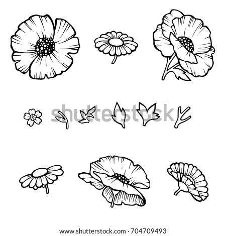 The poppy flower. Linear poppies isolated on white background, floral designer. Vector illustration